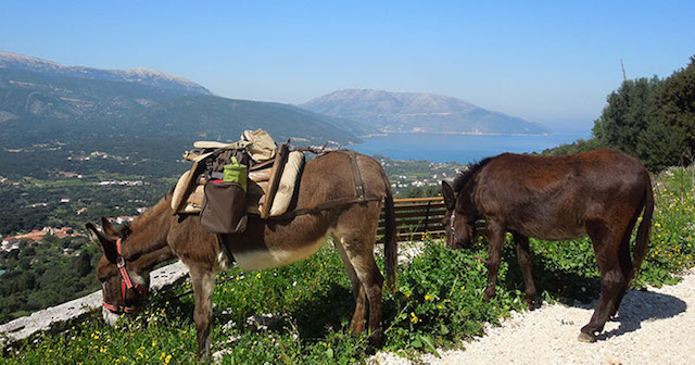 kefalonia car hire